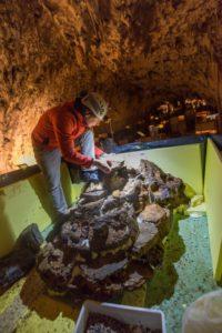 Biolog Primož Gnezda ob urejanju novega akvarija v Vivariju Proteus (foto: Iztok Medja za Postojnsko jamo).