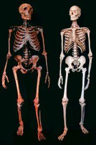 Primerjava okostja med človekom in Neadertalcem