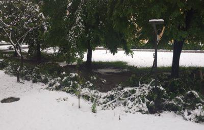 Posledice močnega sneženja, ki nas je presenetilo v sredo - polomljena drevesa. Takole je bilo danes zjutraj v Ljubljani (foto: Nova24TV).