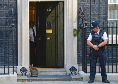 Maček Larry ostaja na Downing Streetu 1