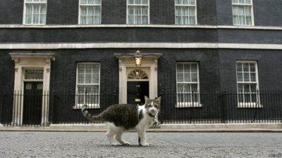 Maček Larry ostaja na Downing Streetu 3