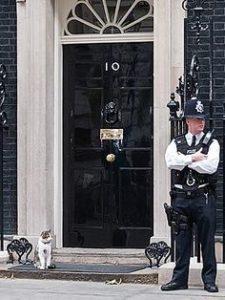 Maček Larry ostaja na Downing Streetu 4
