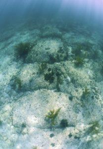 Tole čudo sveta se skriva v morju v okolici otoka Bimini na Bahamih. Foto: iStock